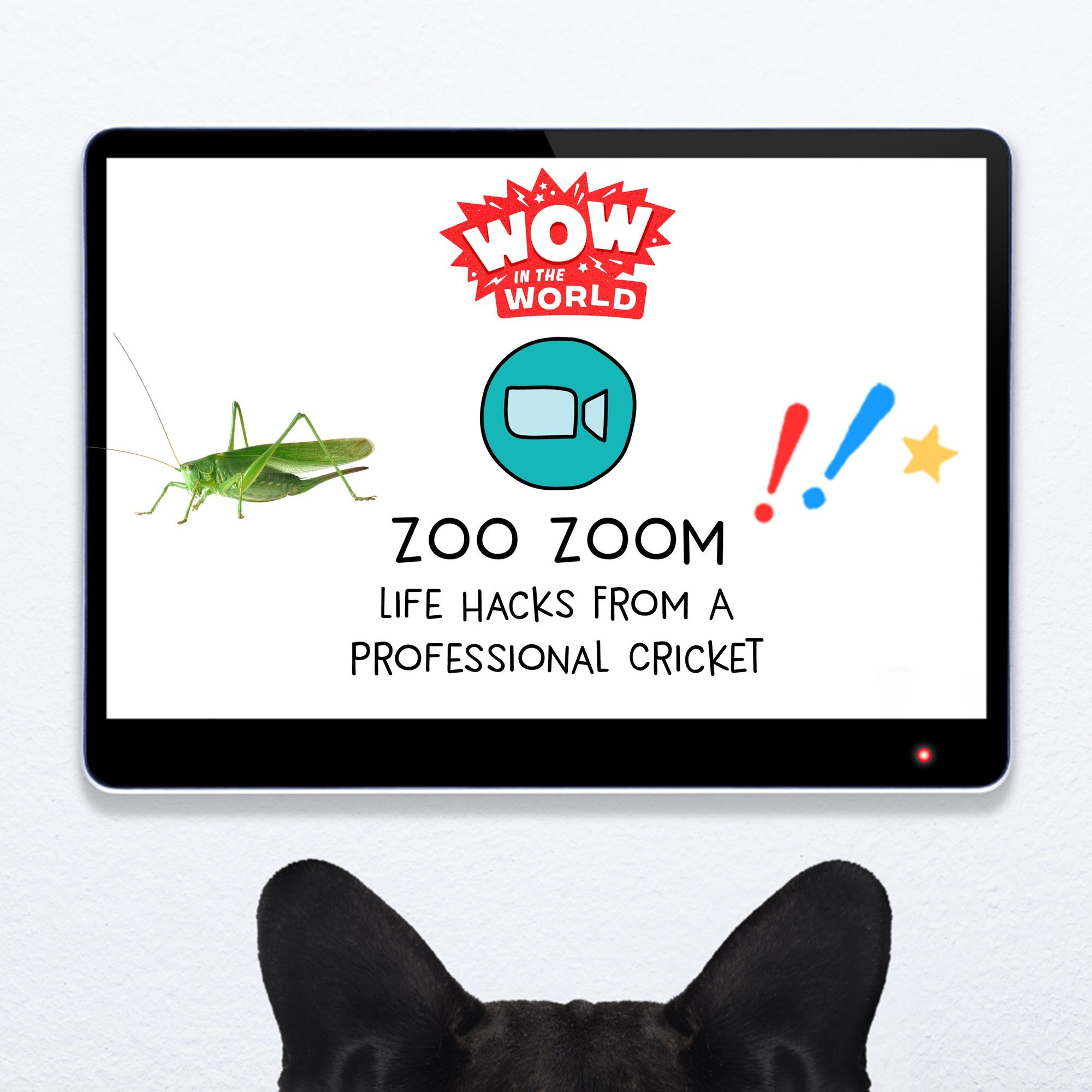 Zoo Zoom Famous: Life Hacks From A Professional Cricket