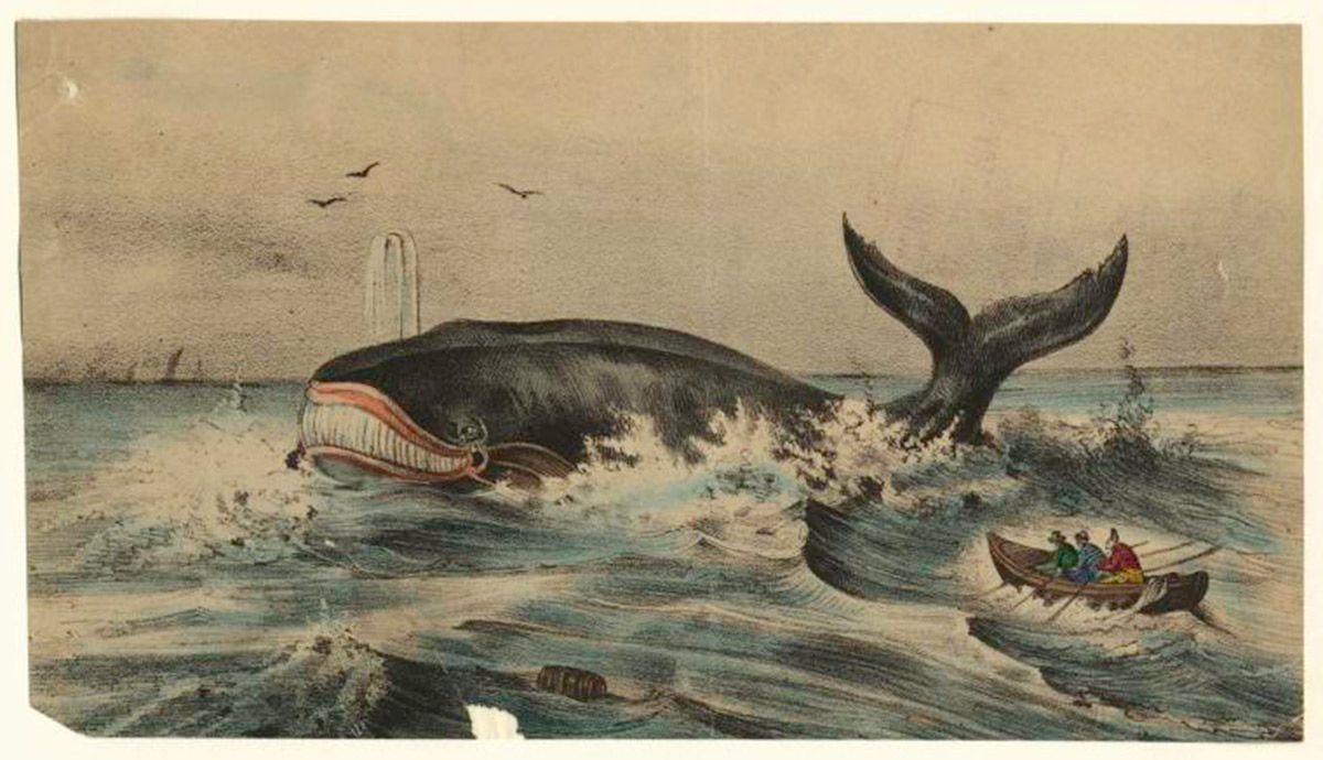 Thar She Blows Again: The History of Whales and America (Part 2)