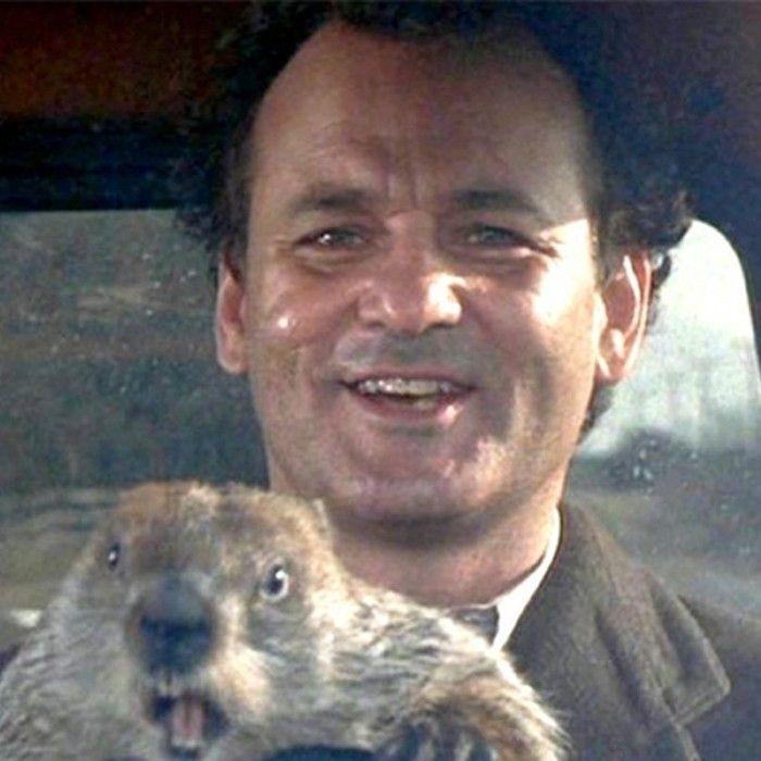 #236: In the Loop, Pt. 1 — Groundhog Day