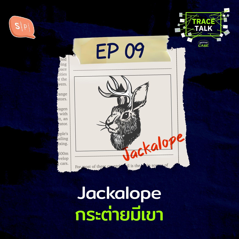 Jackalope กระต่ายมีเขา | Trace Talk EP09