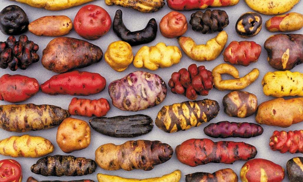 How Potatoes Took Over the World